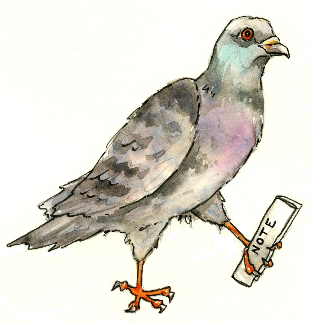 cohenillustration-pigeon.jpg