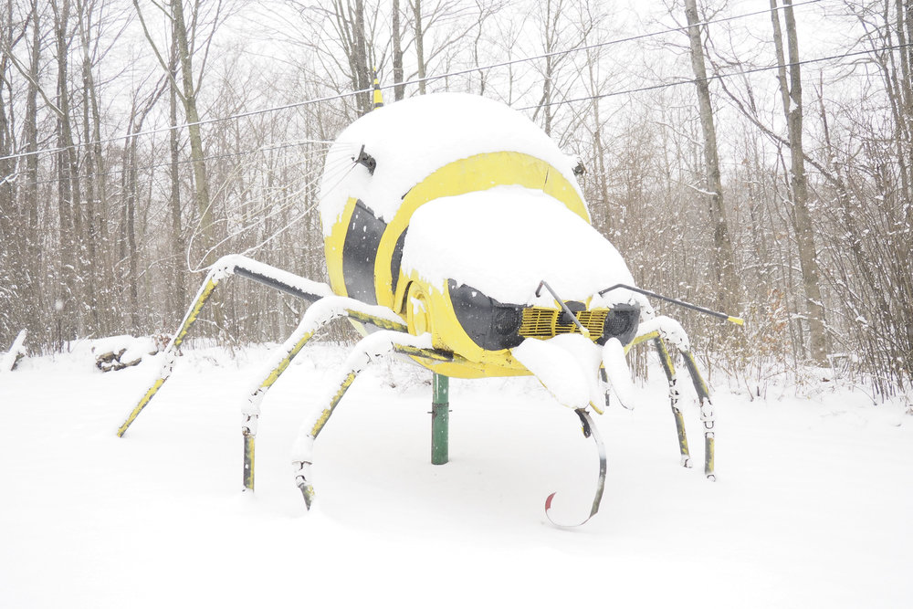 Bumblebee In Winter, Schaefer's Auto Art Erie PA