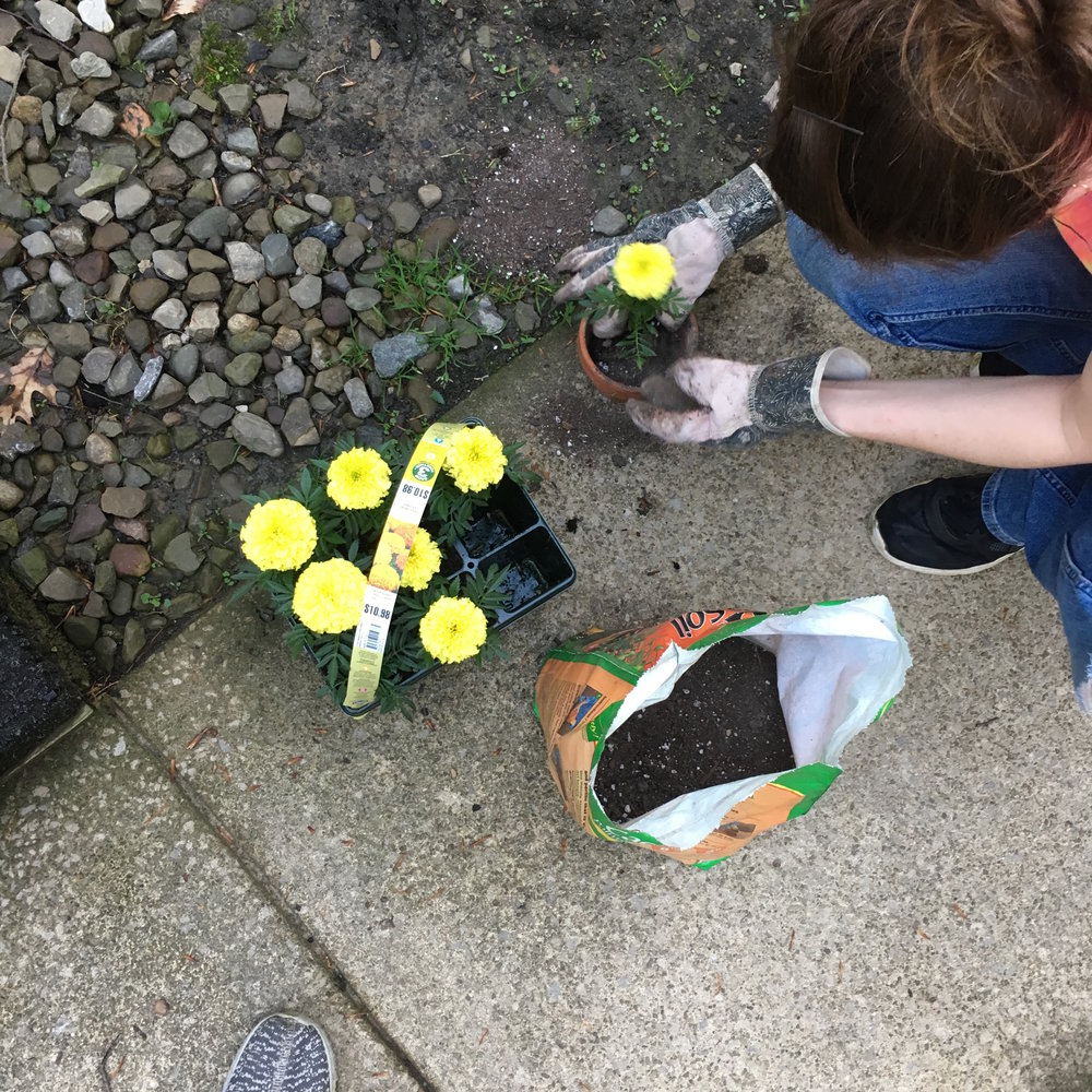 Potting flowers for the The Buzz Box at Schaefer's Auto Art.JPG