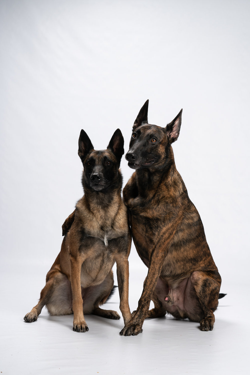 """We had lots of good boys and good girls in the Studio for the event, but these two could """"hug"""" on command from their human!"""