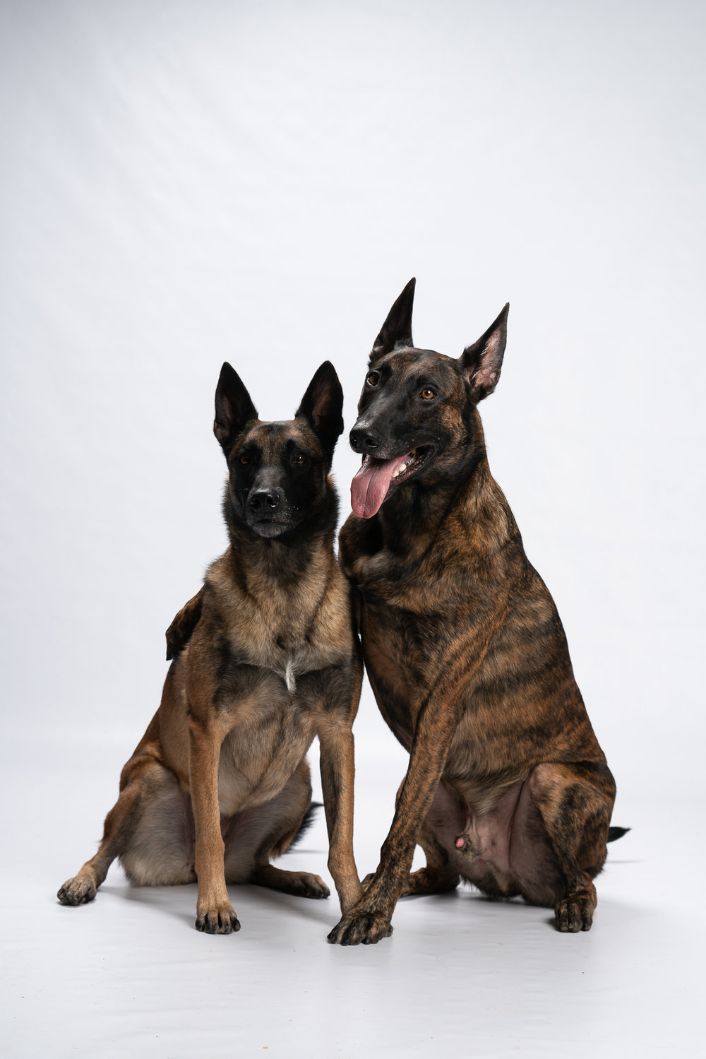 The hugging dogs from our 2nd Annual BARk in the Studio event.