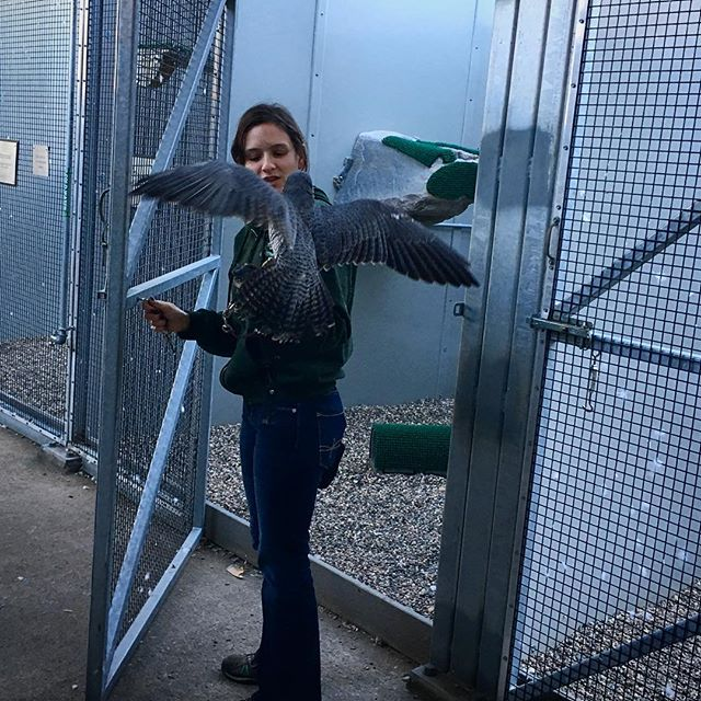 Thanks @katafransen for setting up a fantastic SWE event touring the Raptor Center this Saturday!