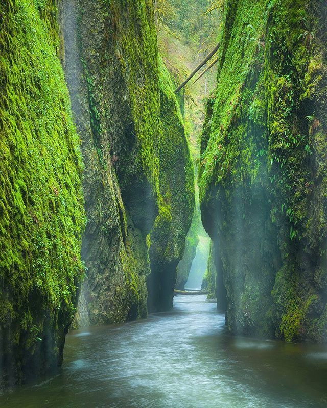 So saddened to hear about the fire that has caused so much destruction in the Columbia River Gorge. I have spent most of my life a short drive from this paradise, and have so many memories attached to these beautiful locations that have been affected. Praying that restoration is swift! * * * * * #folkgrid #worldshotz #wearecascadia #teamcanon #superhubs #earthpix #pnwonderland #bestoforegon #bns_earth #oregonexplored #oregonnw #discoveroregon #youroregon #traveloregon #CanonFanPhoto