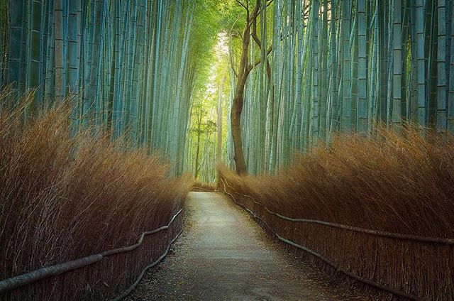 We just got back from an amazing trip in Kyoto, Japan. We have a ton of new images headed your way! This image was taken in the Arashiyama Bamboo forest right after sunrise. Let me know what you guys think! * * * * * #japan #jal #kyoto #arashiyama #visitjapanjp