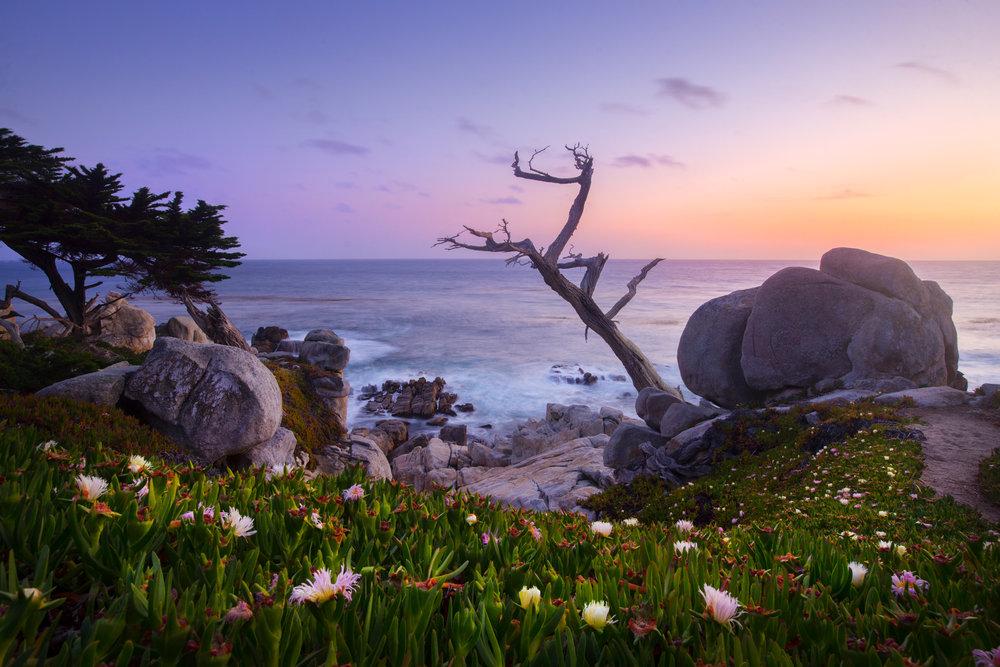 Coastal - Carmel.jpg