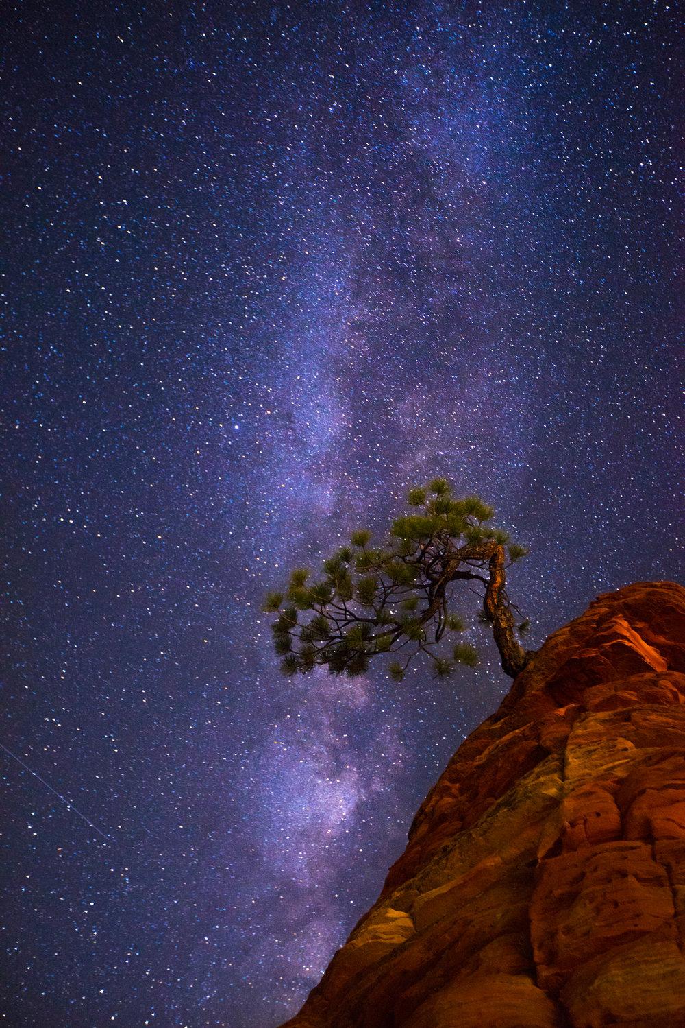 Desert - zion tree.jpg