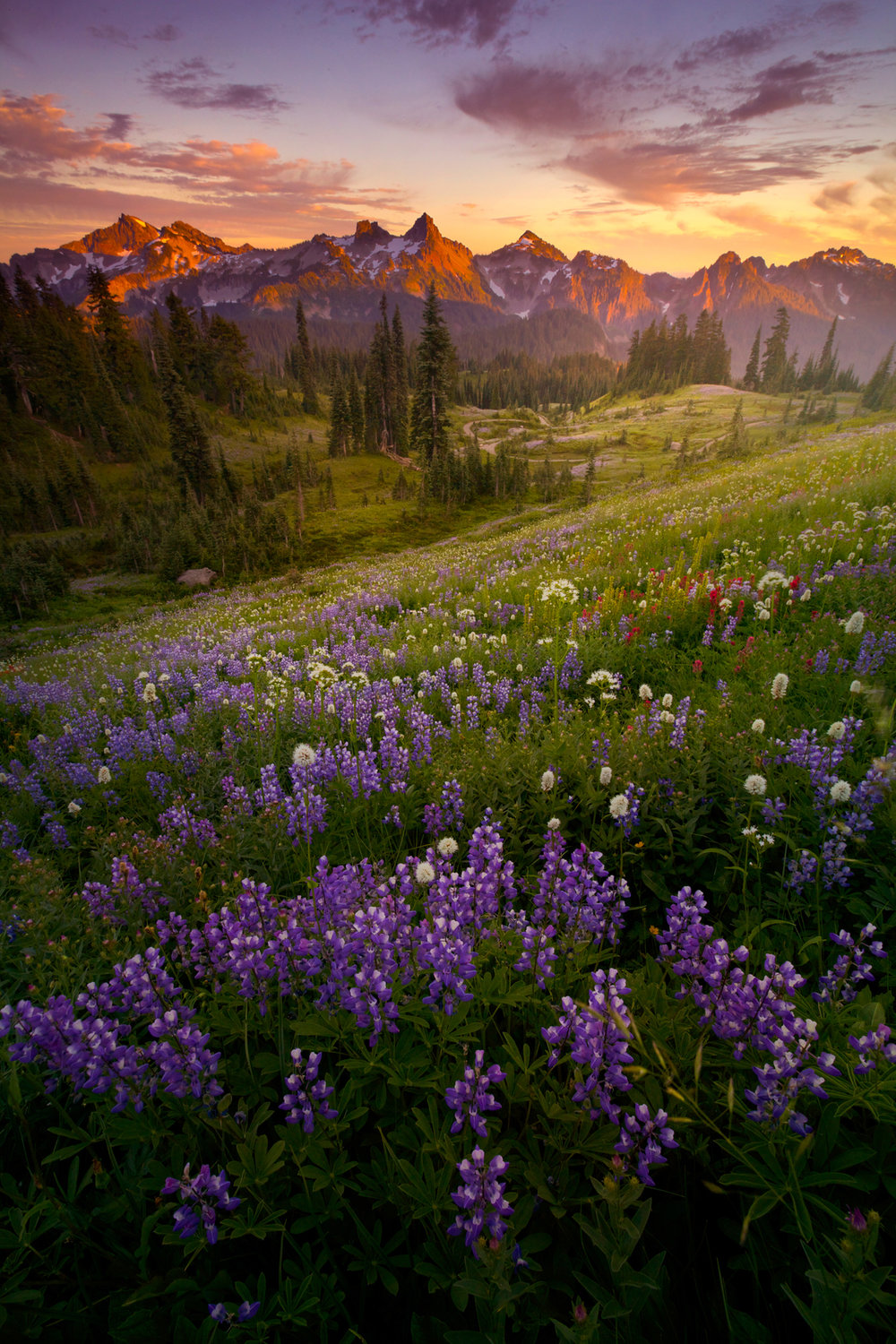 Tatoosh+Range+Final-2268093312-O.jpg