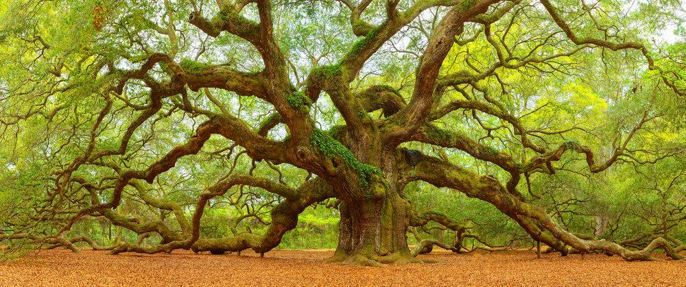 Angel Oak 25x60.jpg