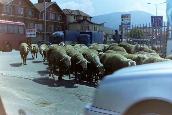 LO Kosovo 8.png