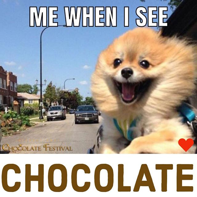 #TGIF #chocolateandfridays #intlchocfest