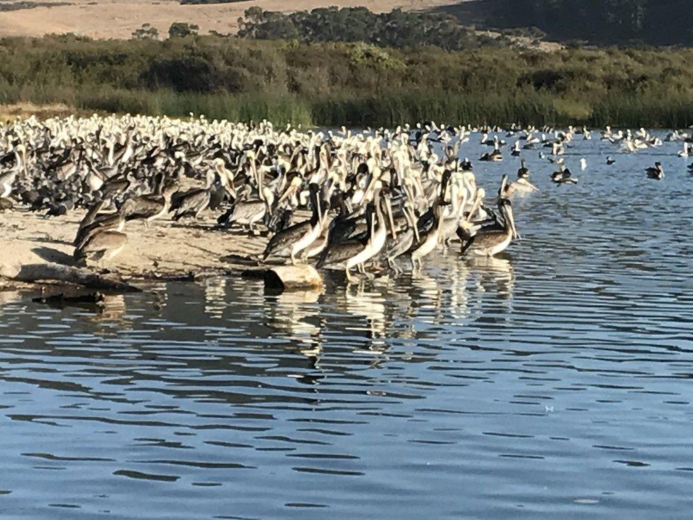 pelicanlandscape2.JPG