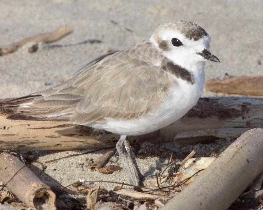 Photo from audubon