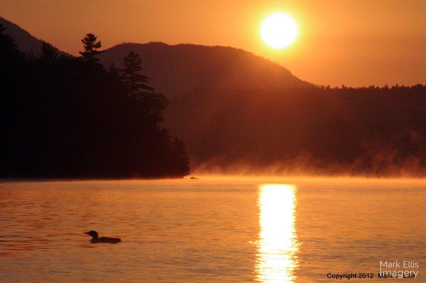 SunriseLoon.jpg
