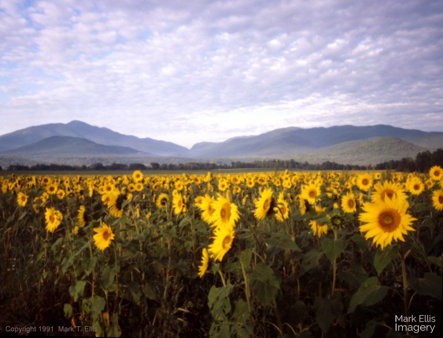 SunflowerMountains.jpg