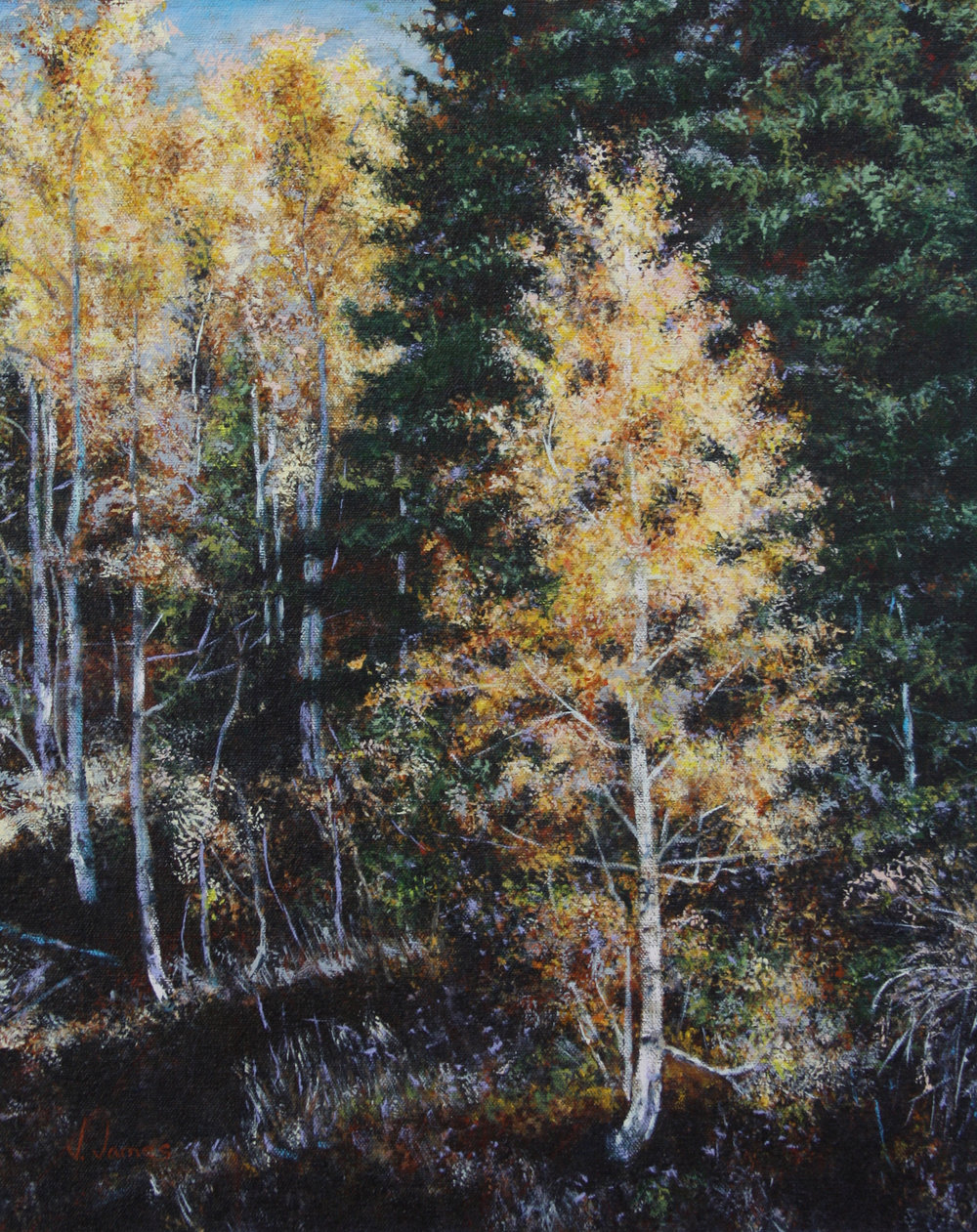 "Golden Aspen, 20"" x 16"" Oil on Canvas"