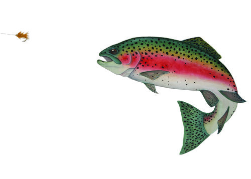 rainbow trout emily hess design