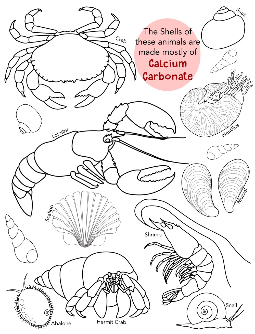 - One page (out of 45) from my Activity Book created with Stanford's Hopkins Marine Lab and the Monterey Bay Aquarium Research Institute. Once the book is fully available to the public I will update information on how to acquire it here.