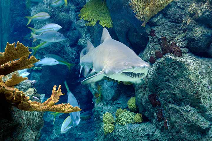 flaquarium-gallery-shark.jpg