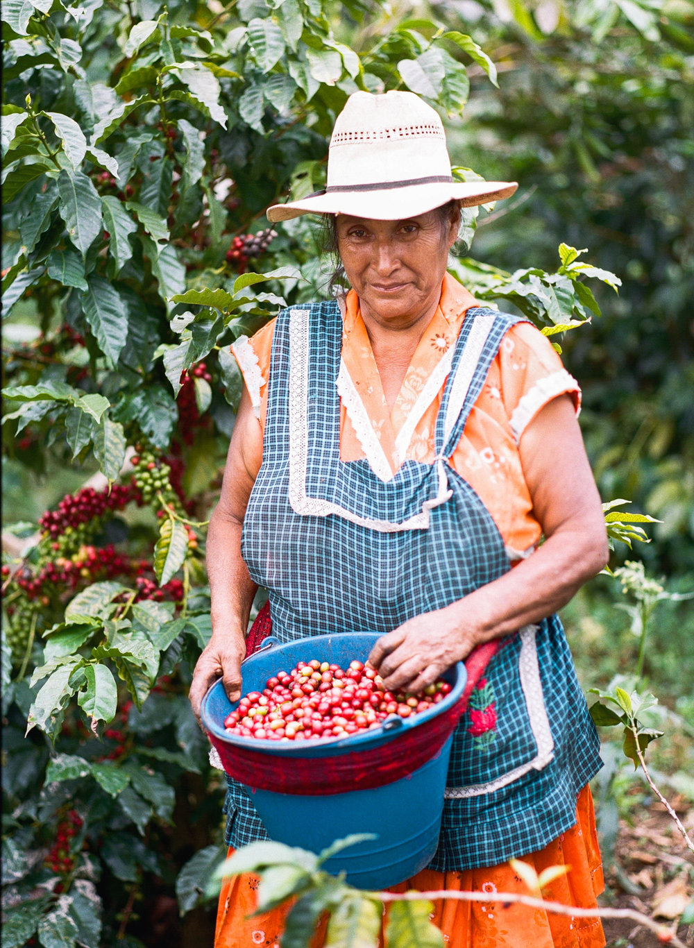 Coffee Picker Puebla, Mexico  2015