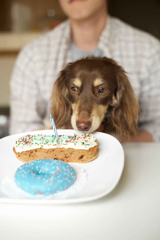 how to make dog cake