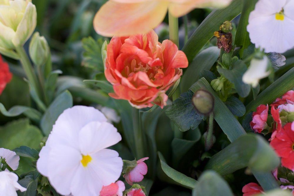 Spring-Florals_DSC_0748.jpg