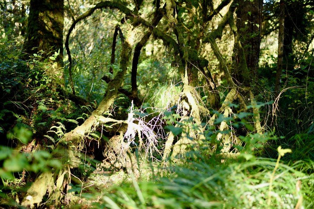 Hiking in Portland_DSC_9682.jpg