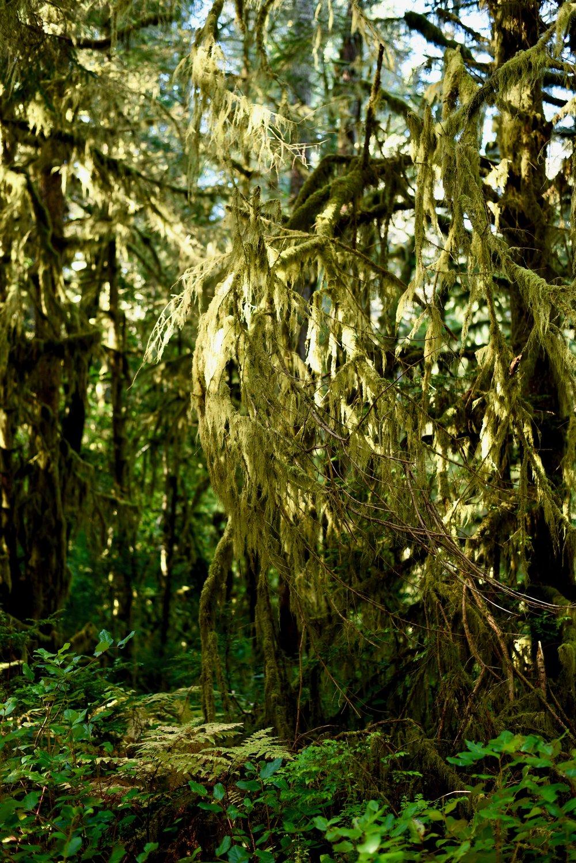 Hiking in Portland_DSC_9689.jpg