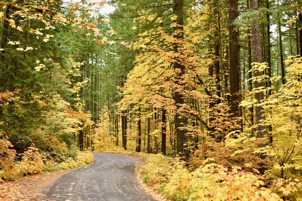 Hiking in Portland_DSC_9750.jpg
