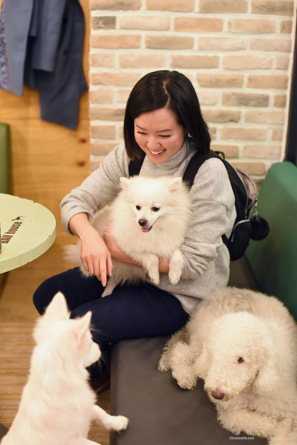 Instagram Korea Dog Cafe Bauhouse_DSC_1098.jpg