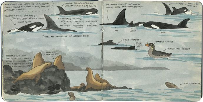 7-chandler_oleary_sanjuan_islands_orcas