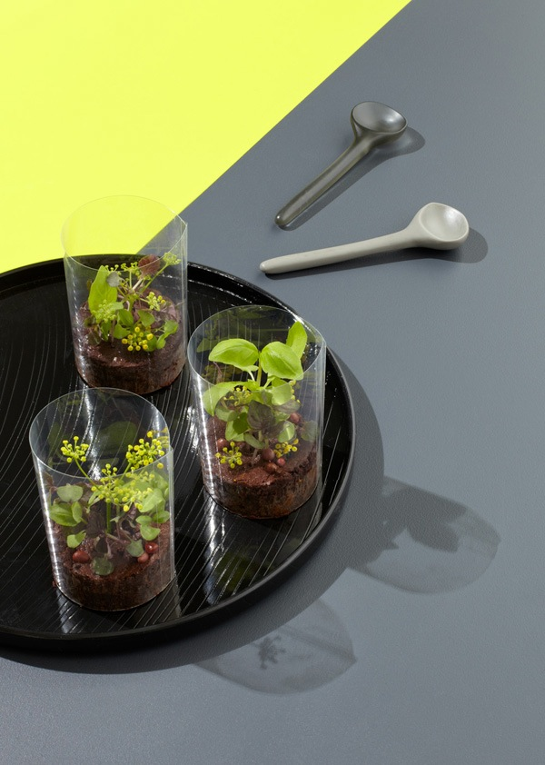 chocolate-terrariums