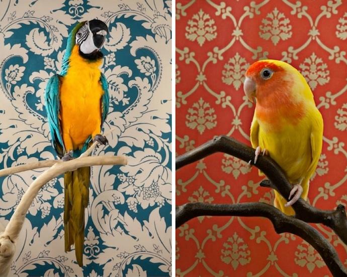 claire-rosen-birds-2