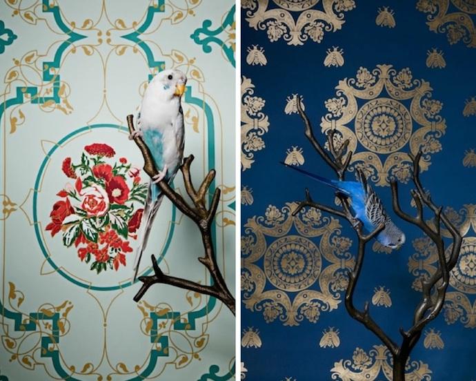 claire-rosen-birds-1