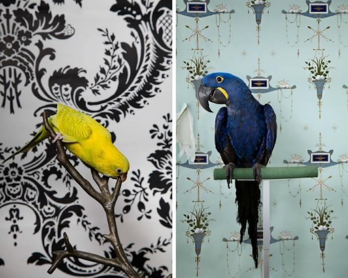 claire-rosen-birds-5
