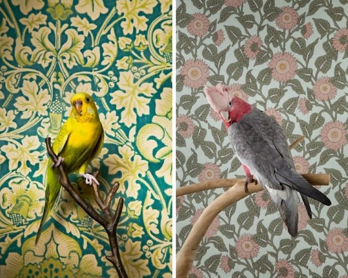 claire-rosen-birds-3