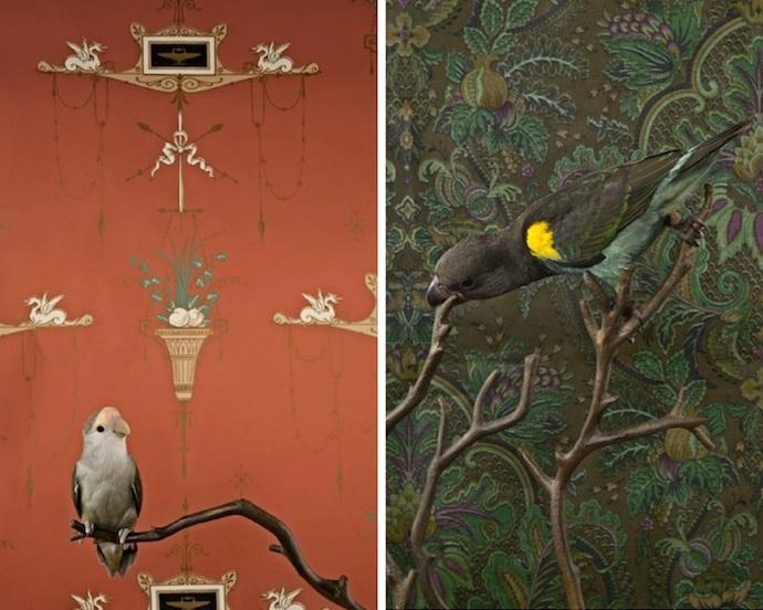 claire-rosen-birds-4