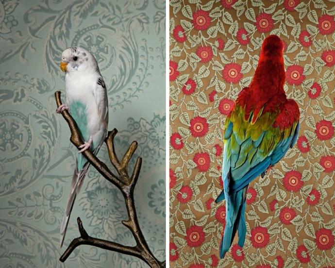 claire-rosen-birds-8
