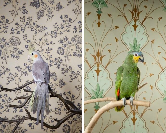claire-rosen-birds-7