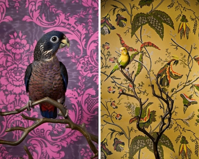 claire-rosen-birds-6