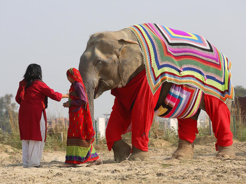knits-elephants