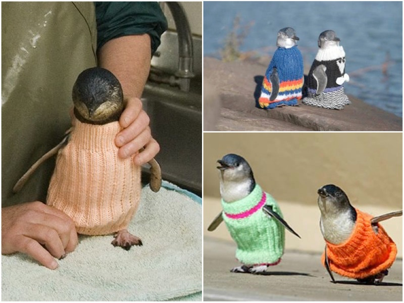 knits-penguins