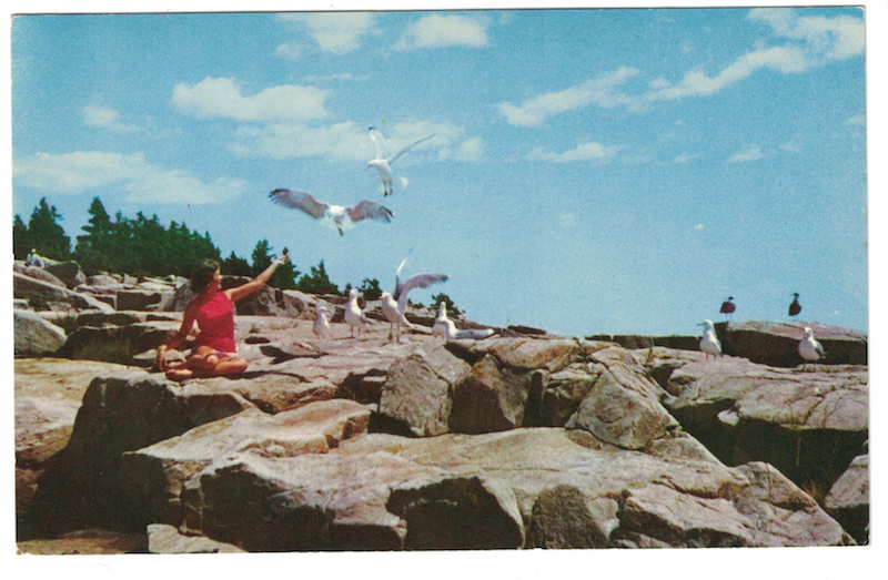 postcard-seagulls
