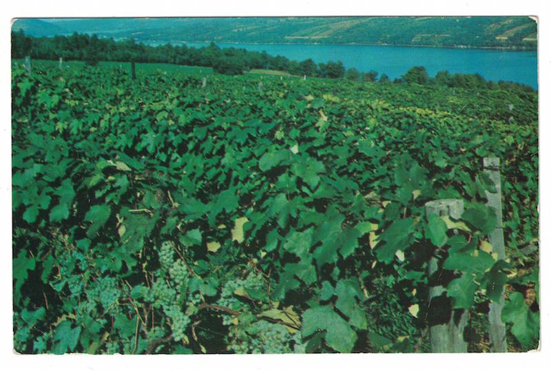postcard-vineyards