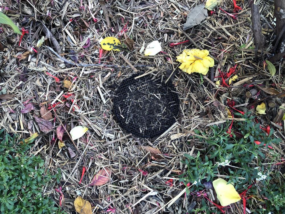 compost-5.jpg