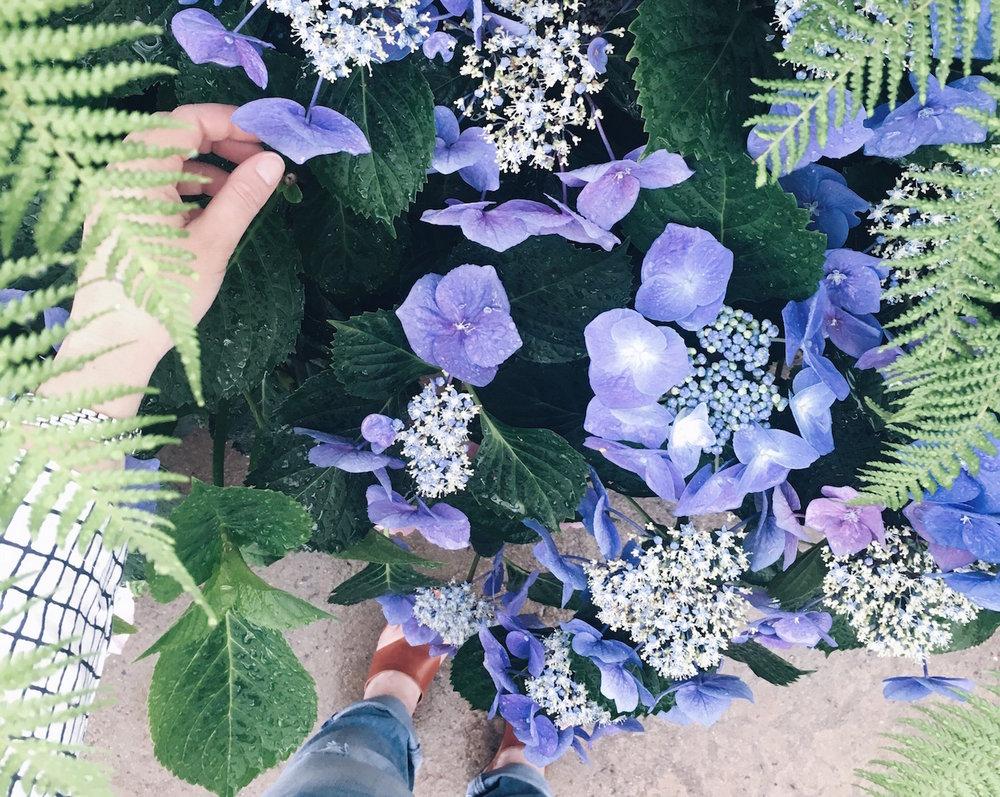 CalmChristmas-flowers.jpg