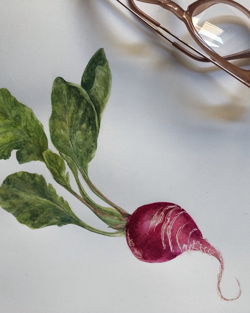 harvest-radish.JPG