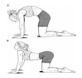 cat-camel-stretch.jpg