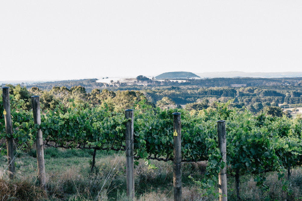 """The aroma of wood smoke mingling with the smell of cooking meat wafts around the vineyard."""