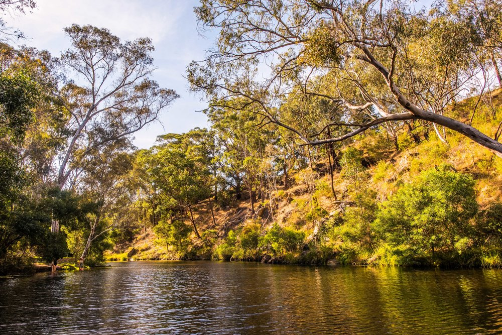 Vaughan Springs on the Loddon River.