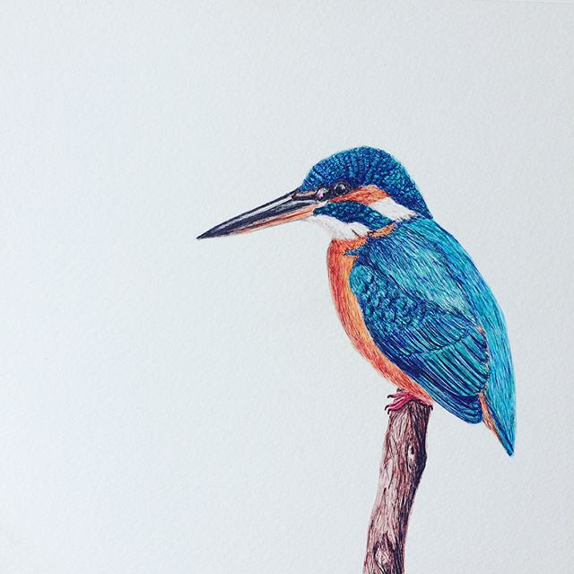 Biro King Fisher